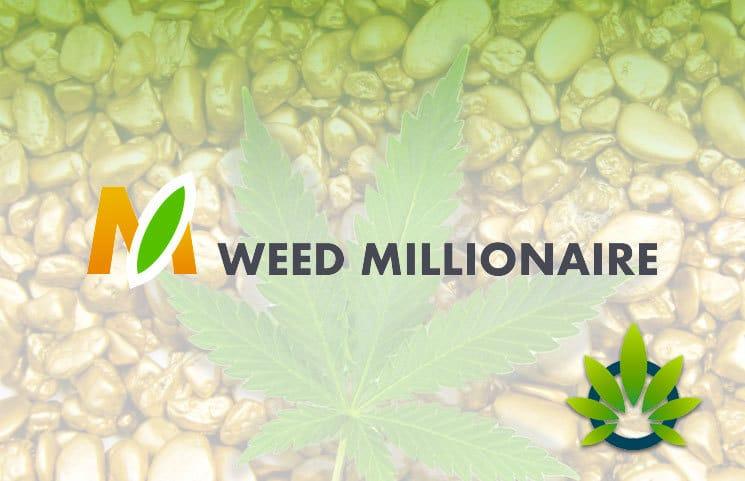 Che cosa è il Weed Millionaire? Weed Millionaire